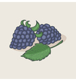 Doodle blackberries and leaf vector image