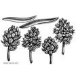 set hand drawn black and white hyacinth vector image