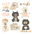 set of cute llama alpaca in yoga asana postures vector image