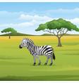 cartoon zebra standing in savannah vector image vector image