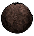 isolated vintage coconut vector image vector image