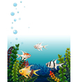 School of fishes under the sea vector image vector image