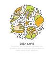 sealife sketched cartoon concept seashell vector image vector image