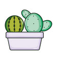 cactus plants exotic in ceramic pot vector image
