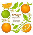 orange elements set vector image vector image