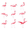 set of isolated pink flamingoes tropical flamingo vector image vector image