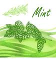 hand drawn fresh mint vector image