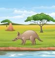 cartoon aardvark in savannah vector image vector image