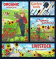 farm animals organic food posters vector image vector image