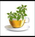 lemon balm herbal tea in a transparent cup vector image vector image
