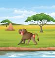 cartoon baboon in savannah vector image vector image