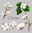 natural cotton flower plant buds and leaf vector image vector image