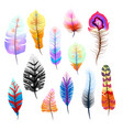 big set of different colorful feathers on white vector image vector image
