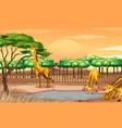 scene with three giraffes at zoo vector image