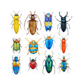 watercolor beetles set vector image vector image