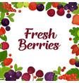 fresh tasty berries grown on farm promotional vector image