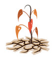 dying plant or tree among dry cracked land vector image