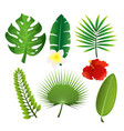 set of exotic tropical leaves vector image vector image