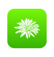 aster flower icon green vector image vector image
