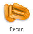 pecan mockup realistic style vector image