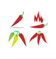 red hot chilli vector image vector image