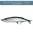 Saury Marine Food Fish vector image vector image