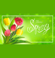 spring bouguet of tulips vector image vector image
