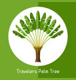 travelers palm tree of exotic vector image vector image