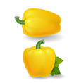 yellow sweet bulgarian bell pepper realistic vector image
