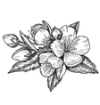 flowers and leaves of the apple tree vector image