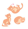 collection of of cute cat in vector image vector image