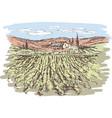 sketch vineyard landscape vector image