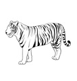 Tiger drawing vector image