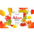 banner for autumn sale in frame from leaves vector image vector image