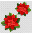 christmas poinsettia isolated transparent vector image