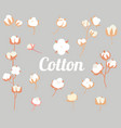 cotton plant flower in a flat style isolated on vector image vector image