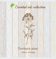 pure essential oil collection toothpeak-plant vector image vector image