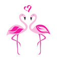 two flamingos in love vector image