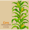 corn plant pattern on color background vector image