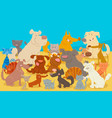 dogs and cats cartoon animal characters vector image