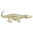 Crocodile skeletal system vector image vector image