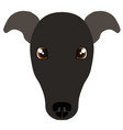 italian greyhound avatar vector image