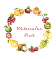 Watercolor fruit vector image vector image