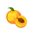 cartoon fresh peach isolated on white background vector image