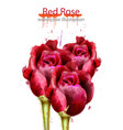 red roses watercolor background beautiful vector image