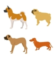Set of purebred dogs isolated on white background vector image