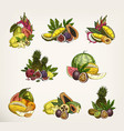 sketched exotic and tropical fruits vector image