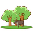 isolated picture deer in forest vector image