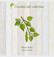Birch essential oil label aromatic plant vector image