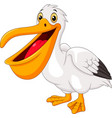 cartoon pelican isolated on white background vector image vector image
